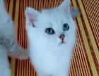 江都小雅猫屋销售宠物猫