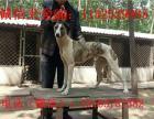 舟山市哪里有卖猎犬的