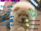 宠物店和狗市里的松狮可以买吗 健康的多少钱一只