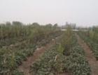 低价急转,安徽省蚌埠市怀远县耕地15亩出租