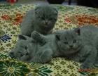 蓝猫弟弟妹妹