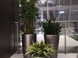 东莞洪梅专业室内绿植租赁写字楼商务楼植物租摆
