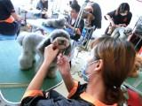 哪里學寵物美容師培訓技術好