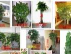绿植租摆与绿化养护