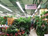 建林景觀:專業花卉綠植批發、室內盆栽綠植批發