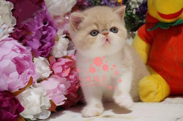 兰州哪里有卖加菲猫的较便宜多少钱一只