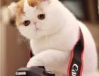 全国连锁--到店挑选--加菲猫/折耳猫/金吉拉--送货到家