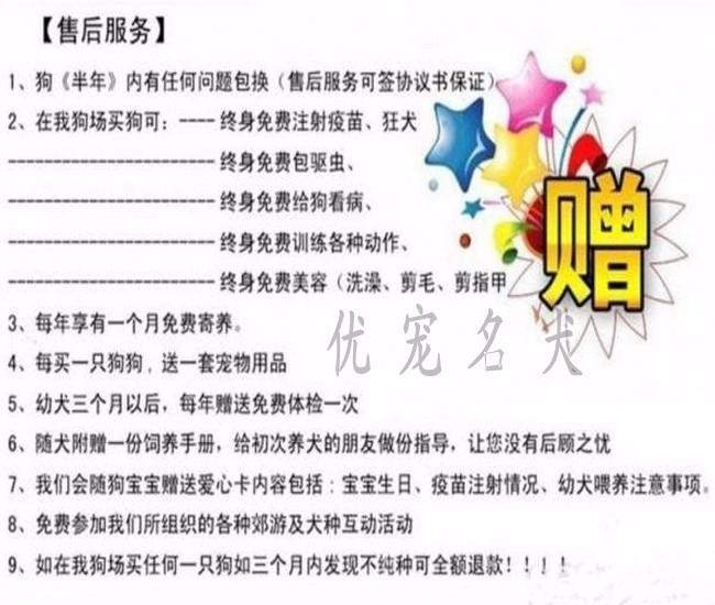 广州哪里可以买到柯基狗狗呢 正规信誉商家优宠名犬养殖场