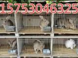 邯郸市哪里有卖杂交野兔的吗 杂交野兔多少钱一只