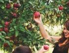 三湖红桃采摘节火热进行中欢迎荆州市民体验采摘乐趣