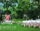 草坪婚礼策划司仪主持督导乐队摄影摄像道具租赁