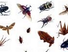 泉州专业灭白蚁、蟑螂、老鼠等(清波控虫)
