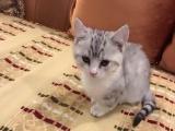 找爱猫人士新主人