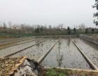 莲藕池泥鳅池15亩出租