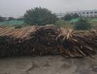 长期高价回收方木板材木头扣件架子管钢模板废旧物资
