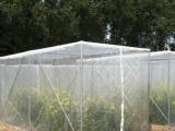 夏秋季节种植蔬菜绿色环保的防虫措施