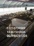 肉鸭用料槽,可限料鸭料桶图片,大容量鹅料槽批发