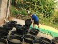 重庆肯卓农业土元基地现面向全国招100名养殖示范户