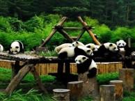 成都黄龙溪乐山大佛峨眉山都江堰熊猫乐园六日游民安国旅