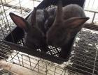 大量发展野兔养殖,奇草荟带你致富