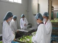 远美农业休闲食品 远美农业休闲食品诚邀加盟