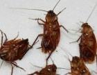 灭蟑螂,灭老鼠我们杀虫彻底,安全环保山岚消杀公司