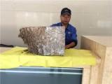 惠州工厂白蚁防治 企业杀虫 单位灭白蚁 就找春华公司