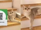 烟台哪里有宠物店 烟台哪里卖宠物猫便宜 烟台蓝猫价格