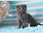 欢迎上门选购蓝猫宝宝DDMM个个萌萌哒