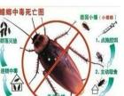 聊城专业灭鼠、灭蟑螂、灭白蚁、杀虫、灭四害公司