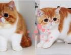 青岛人都到哪里去买加菲猫 青岛较便宜加菲猫价格