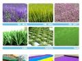 国内专业生产幼儿园草坪厂家加盟