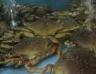 面包蟹 馒头蟹