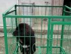 角铁钢筋焊接狗笼出售。