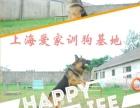 狗狗定点大小便纠正 乱吃地上东西 上海大型豪华训狗基地