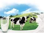 生鲜食材新鲜蔬菜新鲜水果新鲜牛奶订购配送