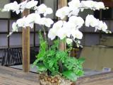 杭州雨馨园艺有限公司从事,花卉租赁,绿植租摆,绿植养护等服务