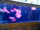 出售观赏鱼包活鱼缸养护 过滤泵清洗底沙清洗鱼缸消毒