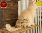 可送货上门纯种健康 波斯猫宝宝 完美品质 签正规