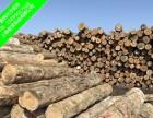 辐射松木方 建筑木方 精品木方 厂家直销