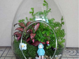 苔藓微景观 生态瓶 苔藓专用容器 苔藓DIY必备 微景观玻璃瓶龙