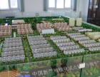 北京专业沙盘模型公司 房地产 地形 壁挂 经验丰富