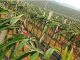 辽源地区开水果店 城市优果加盟