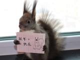 北京哪里有卖松鼠的,魔王松鼠多少钱一只,魔王松鼠北京哪里有卖