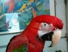 批发零售各种观赏鸟!包括种鸟