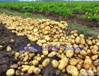 八览土豆,烧出绝色美味