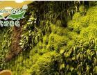 植物墙施工技术,全自动灌溉系统加盟