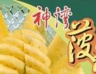 中山正宗神湾菠萝干