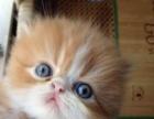 个人家养猫猫生的小猫