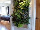 武汉植物墙 千山素集绿化墙 垂直绿化 生态花草园
